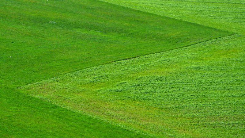 utrzymanie trawnika