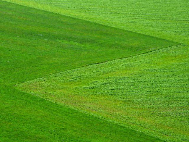 Proste zasady dla utrzymania pięknego trawnika