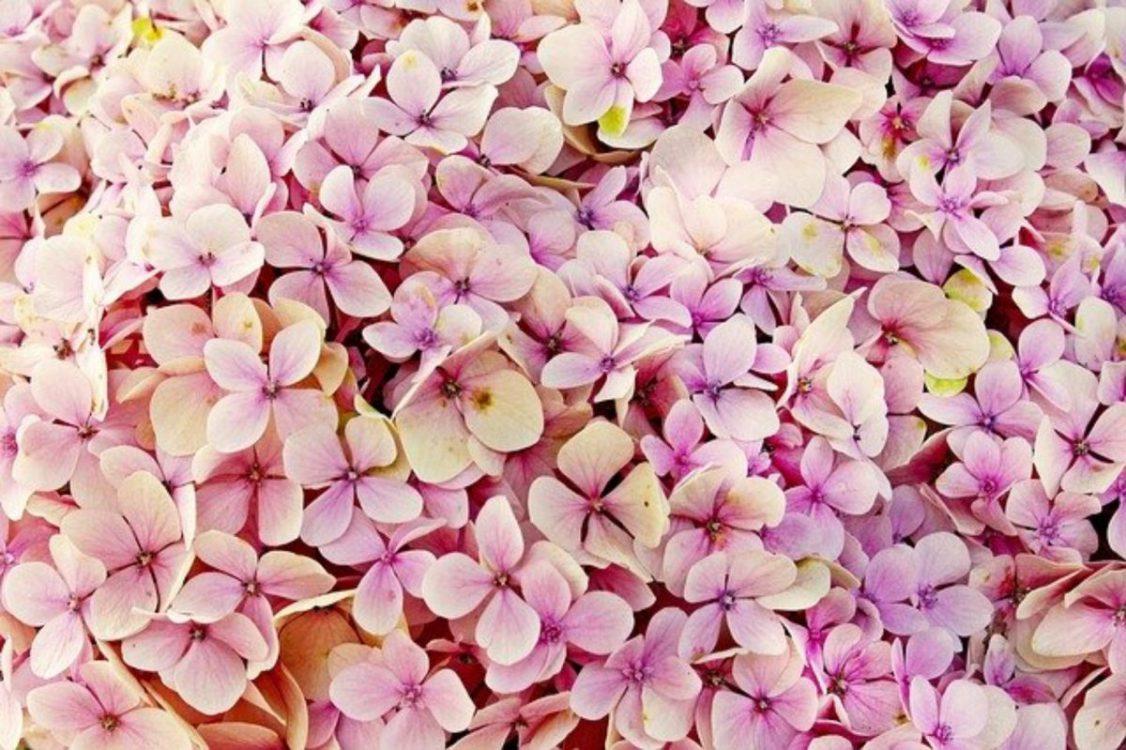 Uprawa kwiatów w ogrodzie