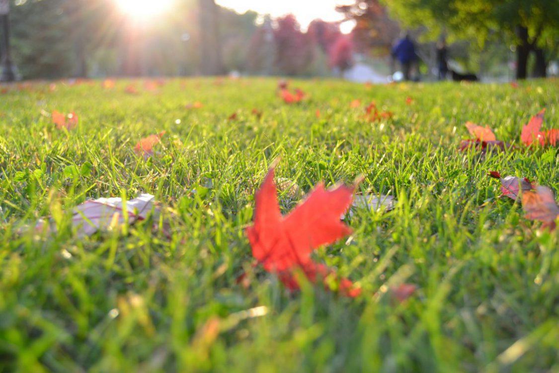 Jak nawozić trawnik jesienią? Poznaj najważniejsze zasady!