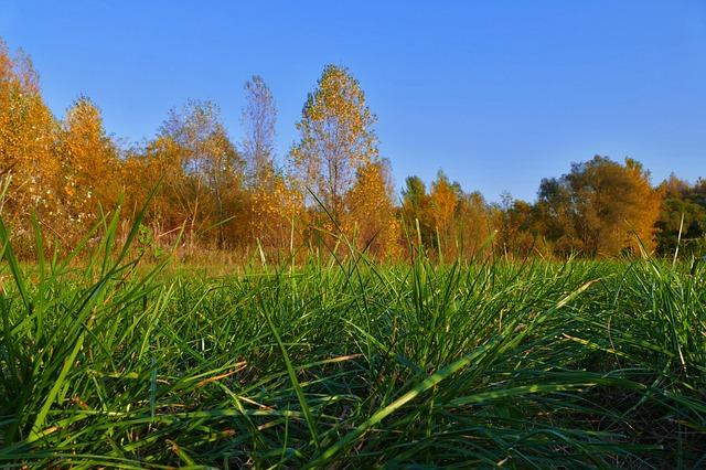 nawożenie trawy