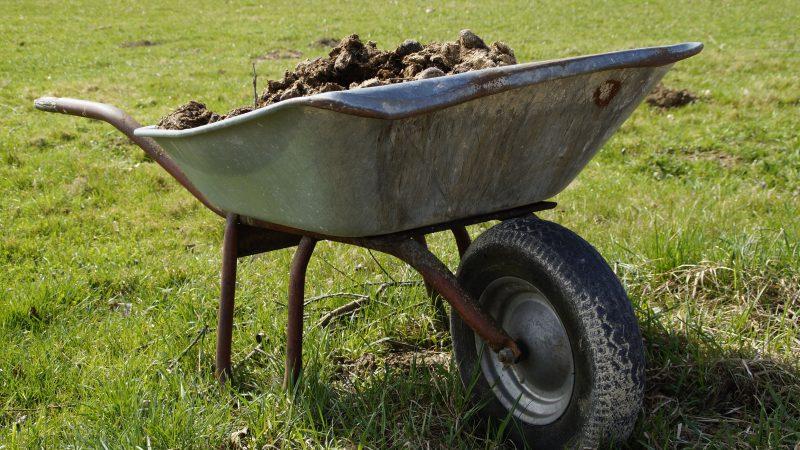 Jesienne nawozy do trawy- kiedy i jak stosować?