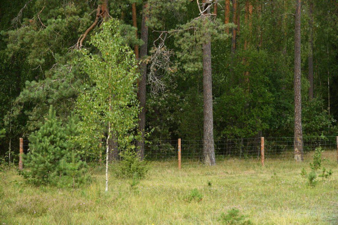 Jak zamontować ogrodzenie z siatki leśnej? Najważniejsze zasady