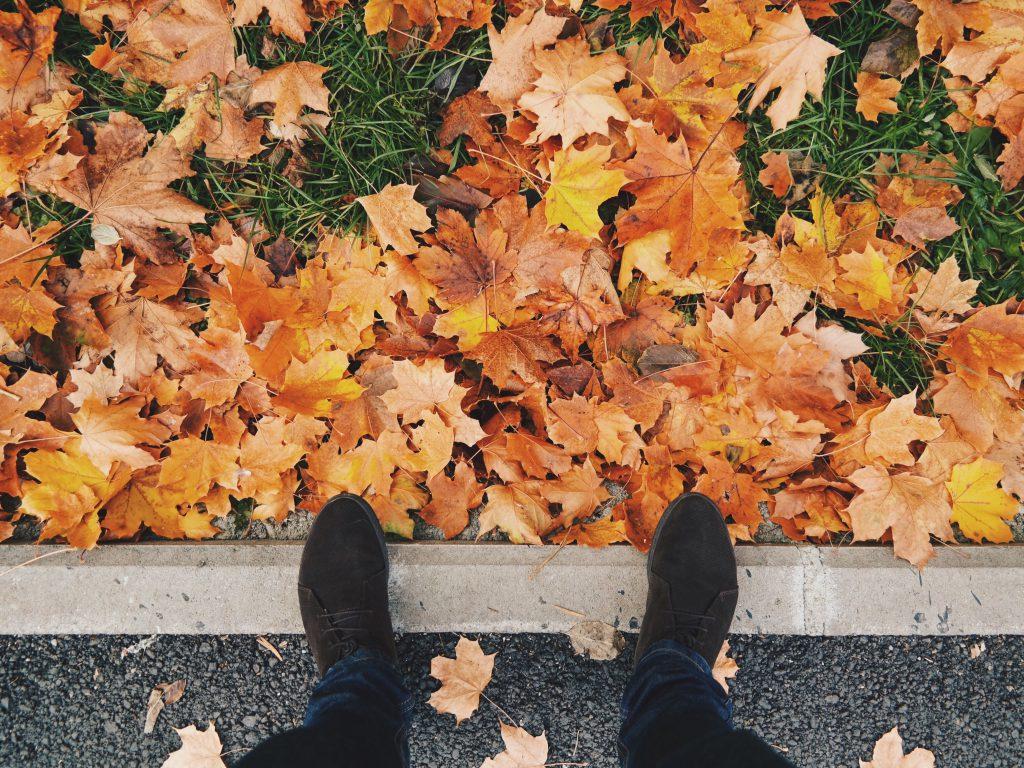 porządki na jesień